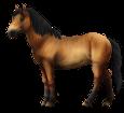 Altaï adulte - robe 79