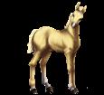 Cheval à acheter de race Poney Boer