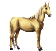 Poney Boer ##STADE## - robe 1607