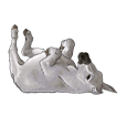 Âne gris ##STADE## - robe 1000000105